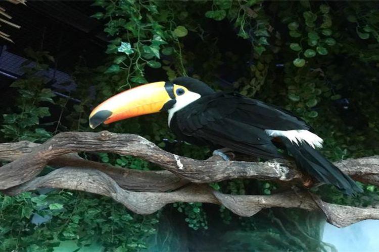 奇幻王國室內動物園1