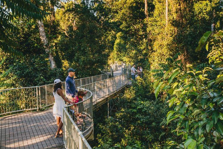 瑪姆雨林天空步道3