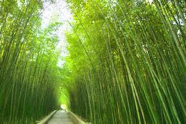 Green Bamboo Garden