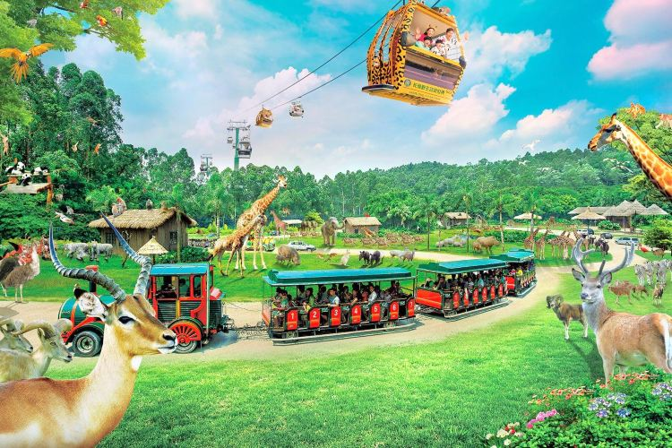 Chimelong Safari Park1