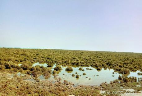 Al Dakhira Natural Reserves