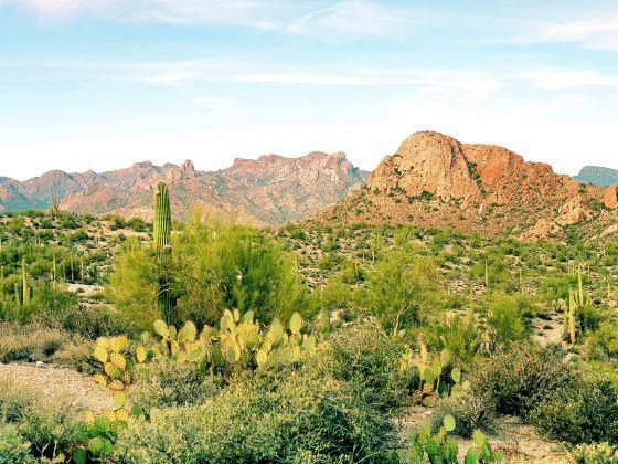 亞利桑那州索娜拉沙漠博物館