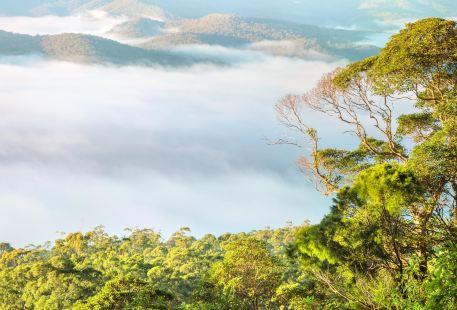 Tamborine National Park