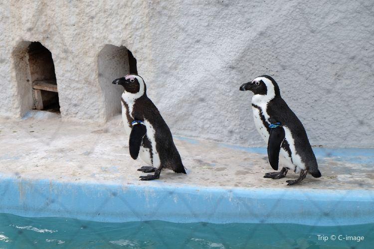 우에노 동물원3