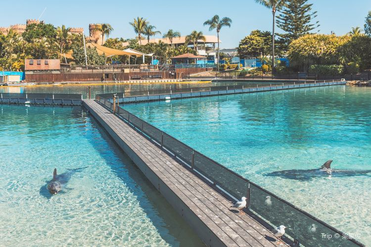 Gold Coast Sea World2