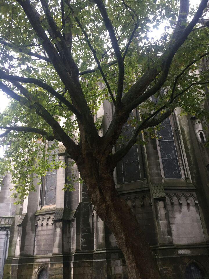 La basilique-cathédrale Notre-Dame-de-la-Treille de Lille