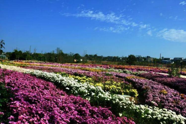 綿陽國際蘭花主題公園1
