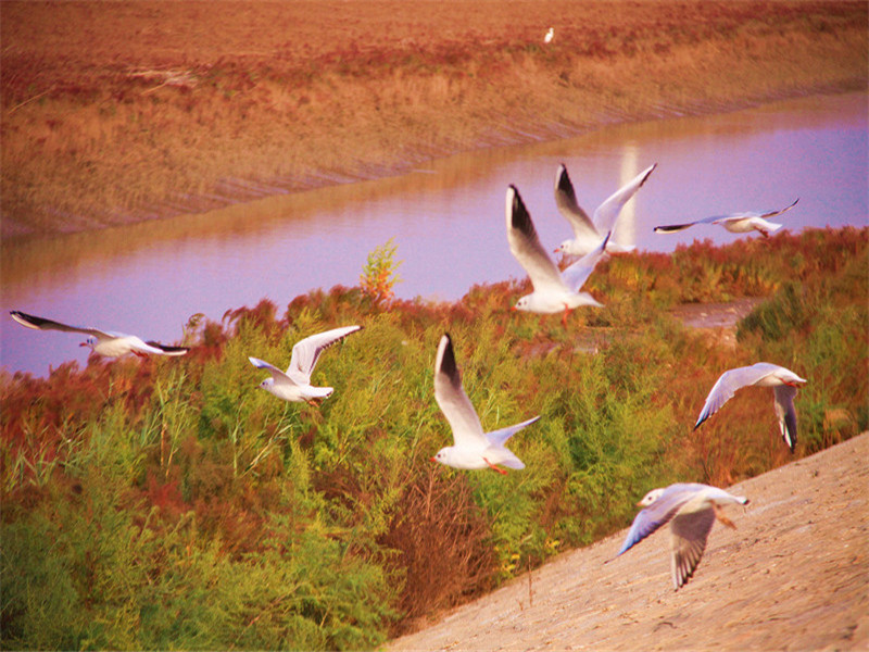 The Yellow River Delta Tourism Island of Eco-culture