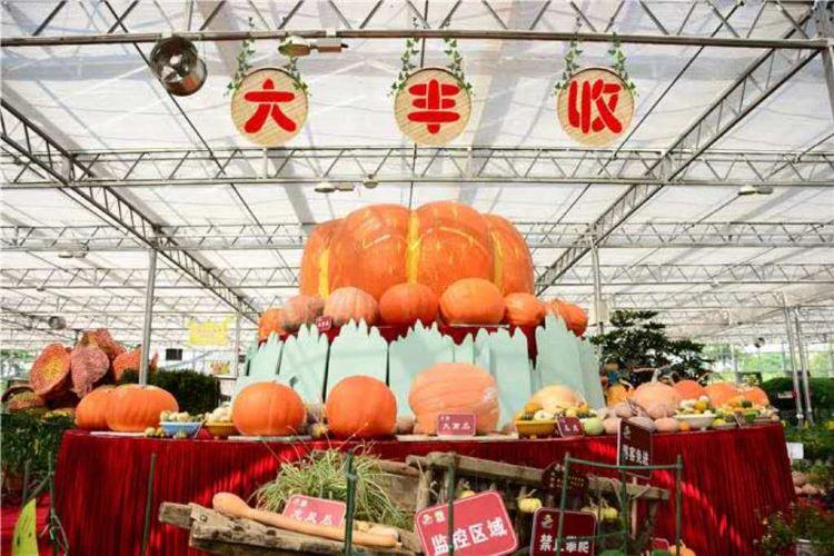 Wucai Tuanyuan Farmers Festival
