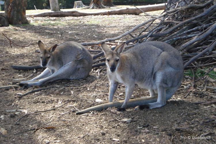 Lone Pine Koala Sanctuary3
