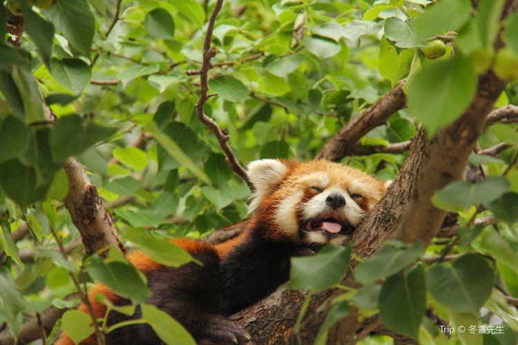 北京野生動物園2
