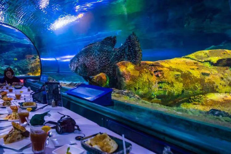 海底世界3
