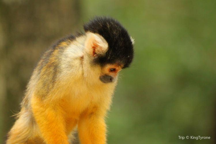 Monkeyland2