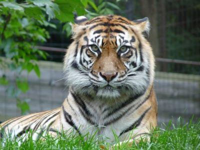 Dungannon Zoo