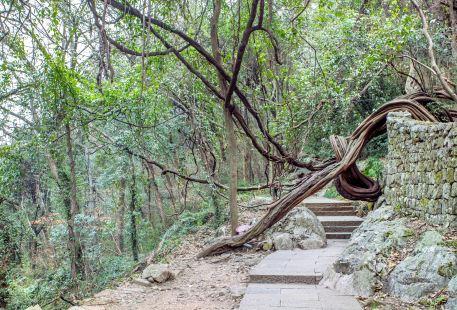 Feng Huang Mountain