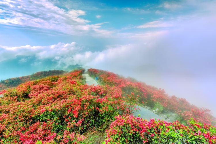 Longquan Mountain