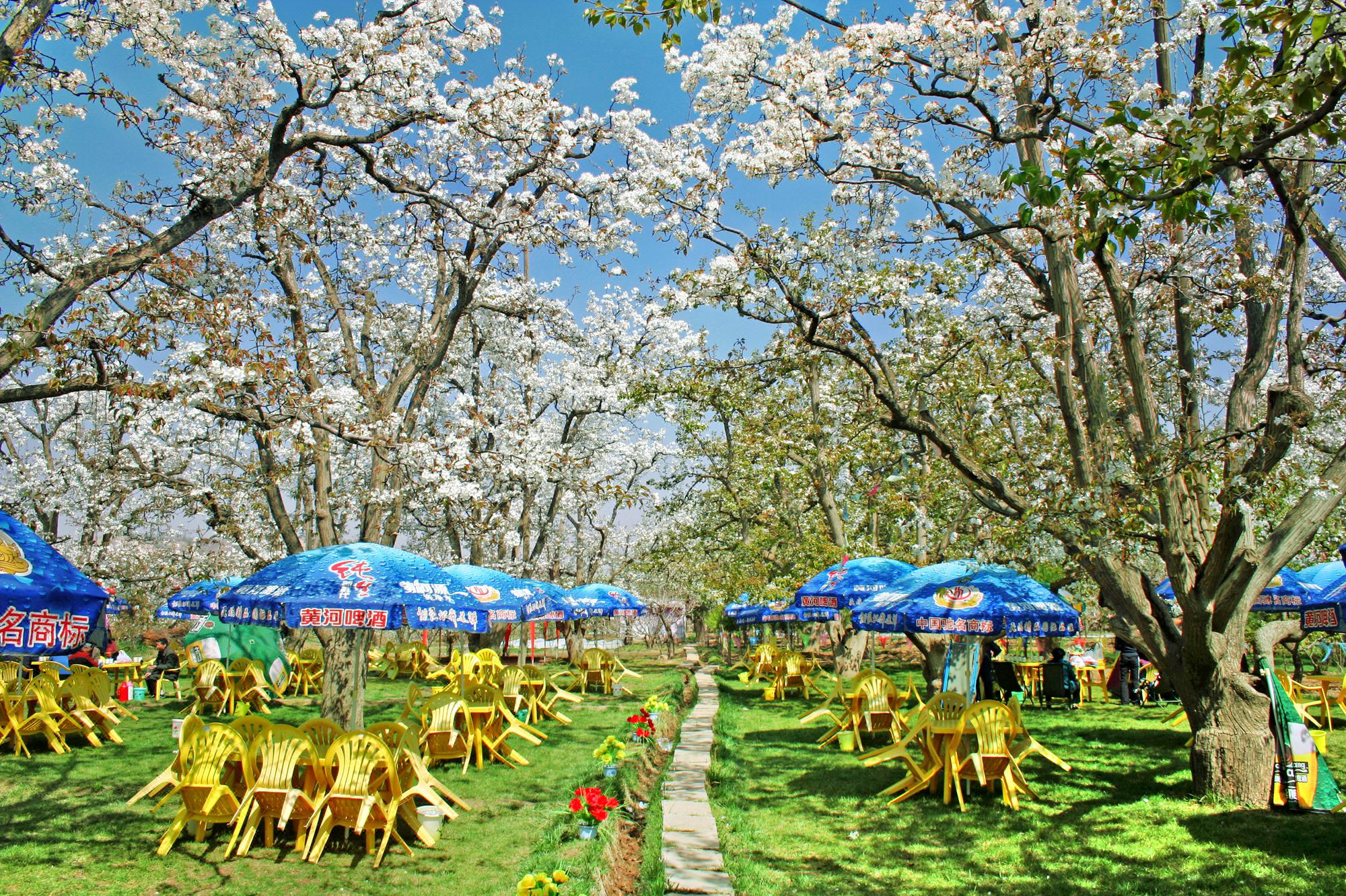 Shichuan  Pear Garden