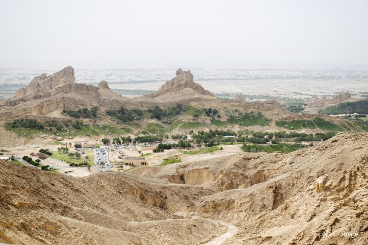 Al Ain Oasis2