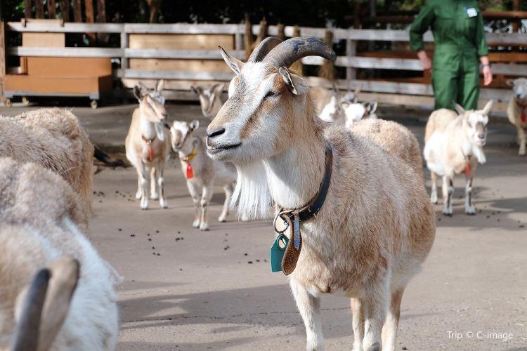 우에노 동물원2