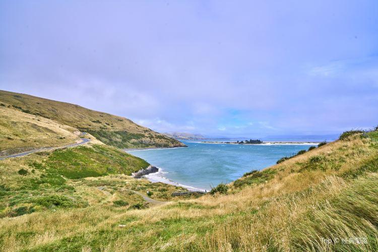 Otago Peninsula4