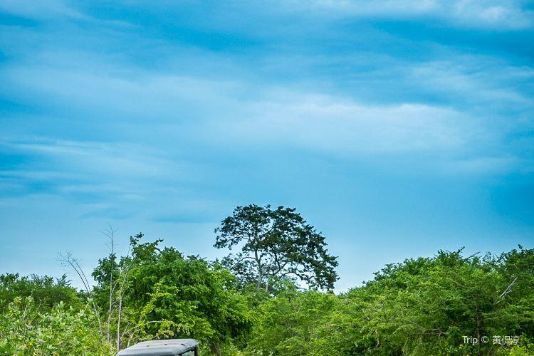 烏達瓦勒韋國家公園2