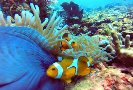 沙比島水肺潛水