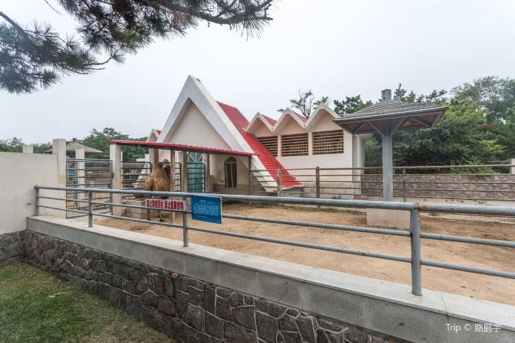 칭다오(청도) 동물원1