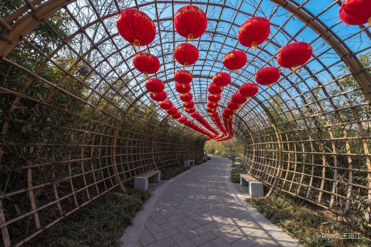 Jinan Botanical Garden1