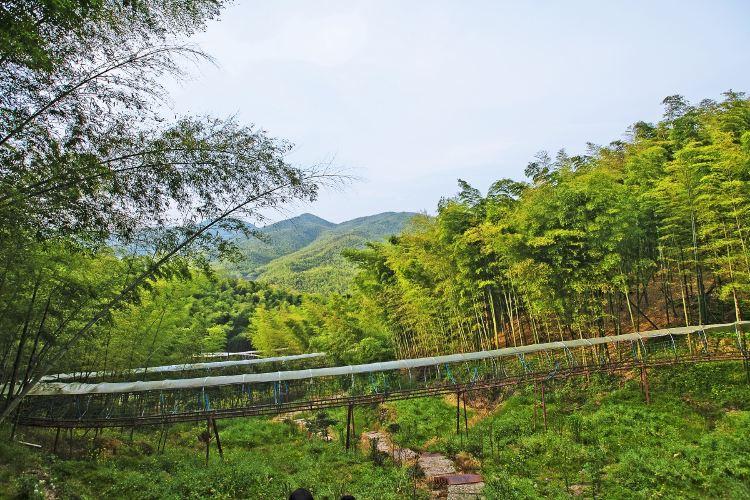 저둥대나무관광지3