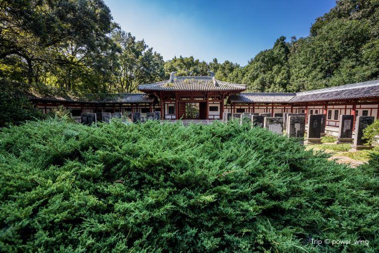 中山陵園風景區4