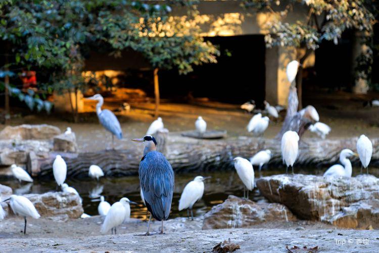濟南動物園1