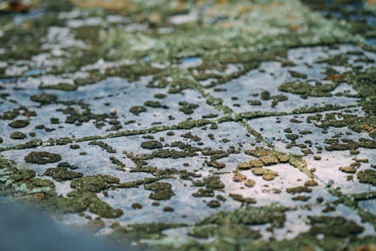 米拉米拉瀑布環線4