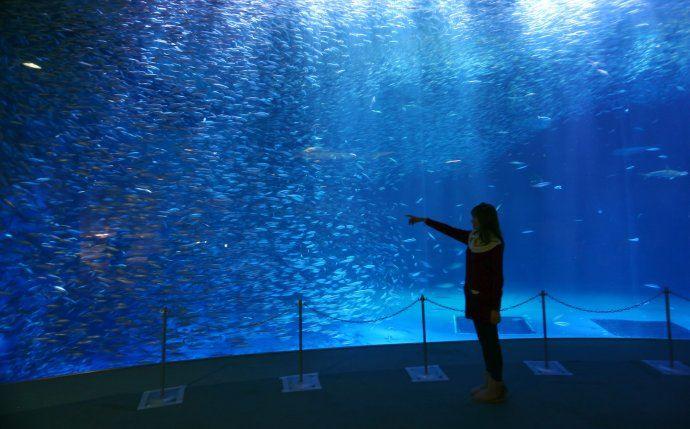 名古屋港水族館4