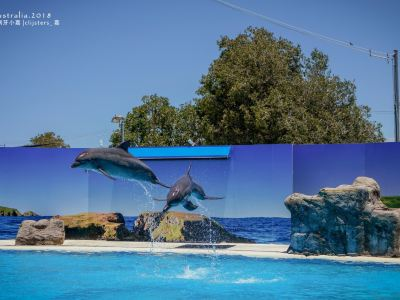 Pet Porpoise Pool - Dolphin Marine Magic