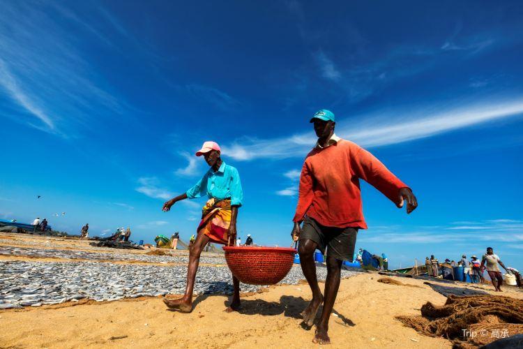 Negombo Central Fish Market2
