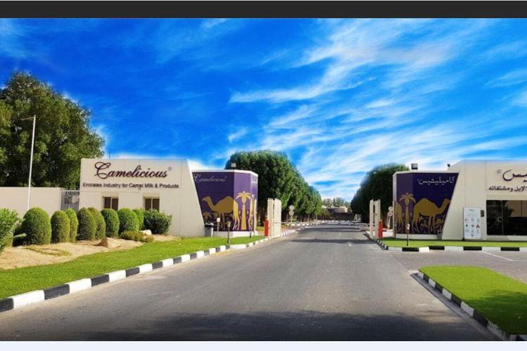 Dubai Camelicious Farm1