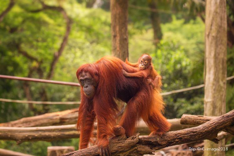 싱가포르 동물원2