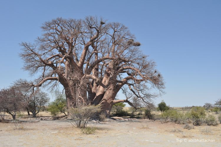 Baines Baobabs4