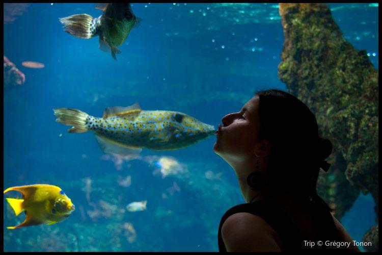 拉羅謝爾水族館2