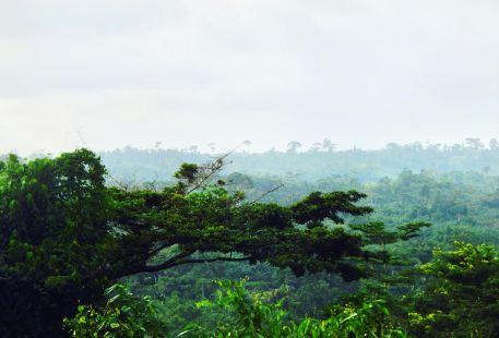 Monkey Forest Resort