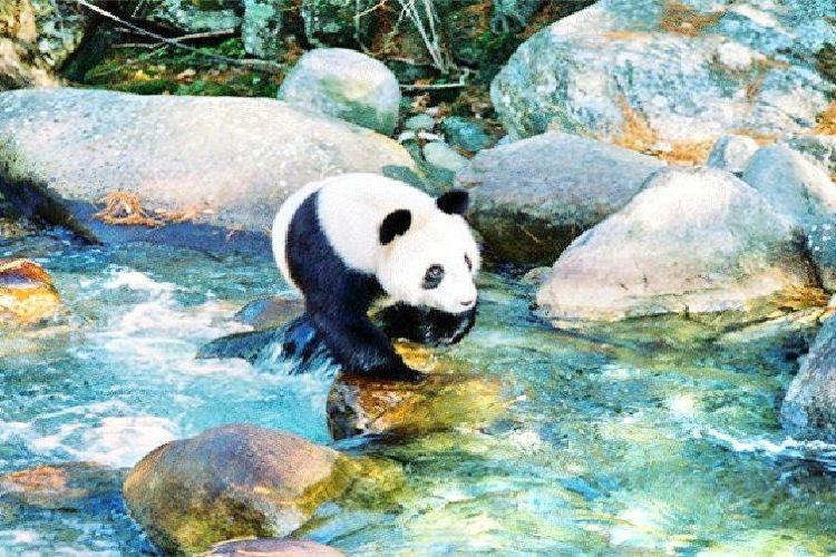 Foping Panda Valley3