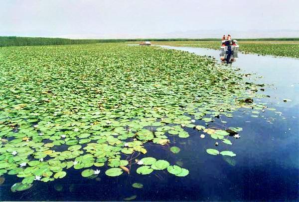 庫爾勒蓮花湖