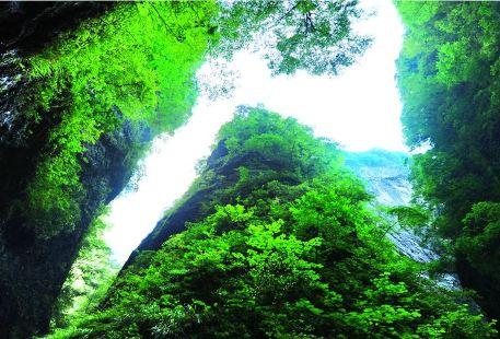 Jinsi Canyon Scenic Area