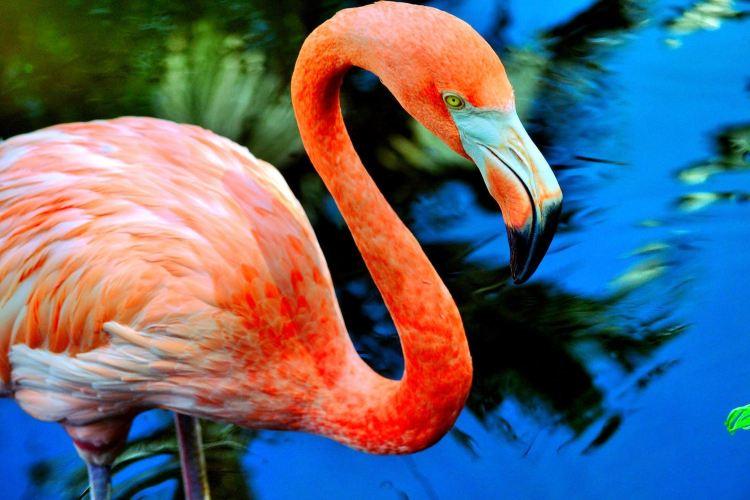 Flamingo Gardens1