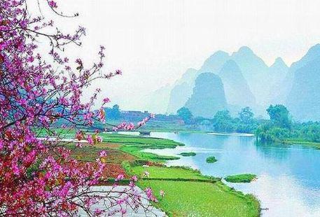 Peach Blossom River