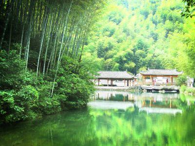 Mukeng Bamboo Sea