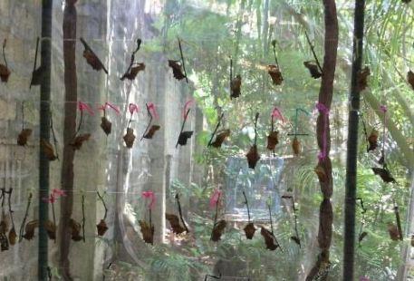 Alexander Butterfly Ecology Farm