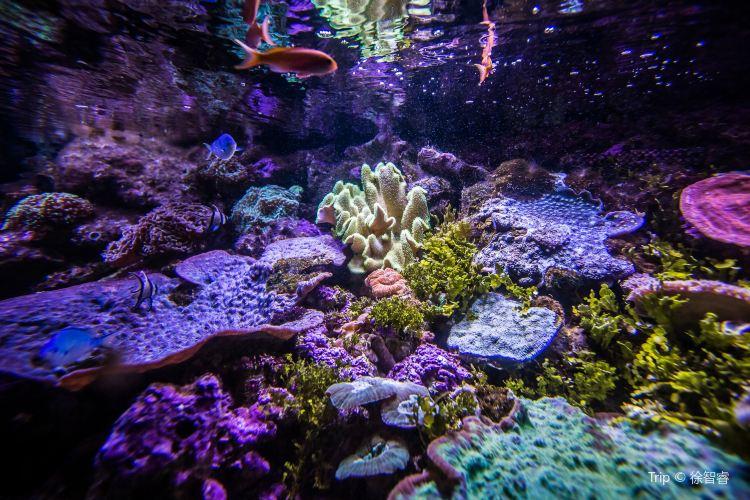 Sea Life Sydney Aquarium3
