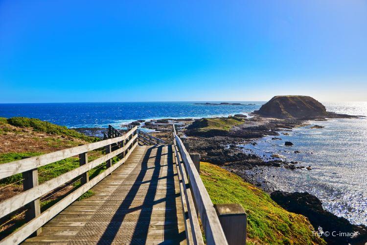 Phillip Island Nature Park2