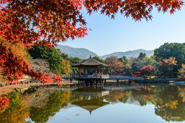 Nara Park4